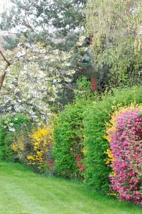 arbres et arbustes du jardinage. Black Bedroom Furniture Sets. Home Design Ideas