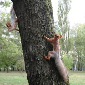 Eloigner les rongeurs des arbres fruitiers du jardinage - Eloigner les oiseaux des arbres fruitiers ...