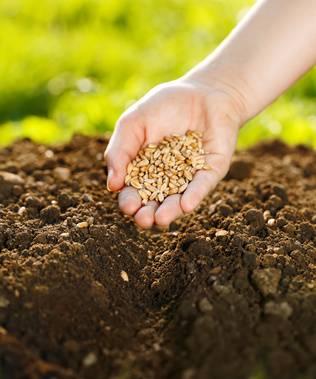 Semis et graines du jardinage - Quand semer les haricots ...
