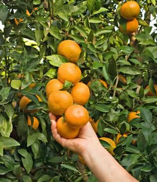 Prévenir et guérir des maladies les arbres fruitiers